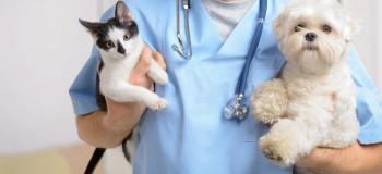 آیا تومورهای پستانی در سگ ها و گربه ها خطرناک است ؟