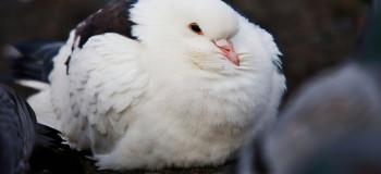 ۱۰ بیماری رایج تنفسی در پرندگان