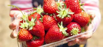 روش نگهداری طولانی مدت توت فرنگی در یخچال