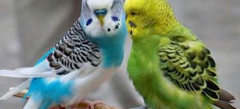 چه کار کنیم تا مرغ عشق آواز بخواند ؟