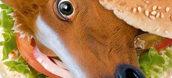 گوشت اسب چه خواصی دارد ؟ حکم خوردن گوشت اسب چیست ؟