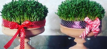 آموزش کاشت سبزه بذر کتان برای هفت سین امسال