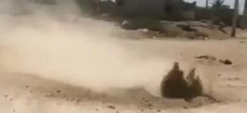 فیلم جوشیدن زمین در بوشهر واقعی است ؟