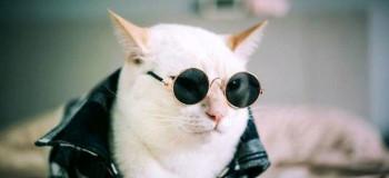 ماجرای درآمد چند هزار دلاری این گربه