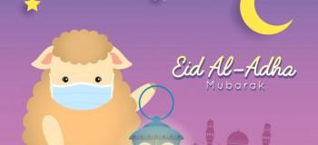 ۲۰ عکس بامزه گوسفند عید قربان با کیفیت بالا