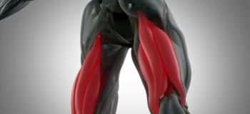 آشنایی با آناتومی عضلات همسترینگ و تقویت آن