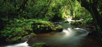 صدای جنگل و طبیعت صوتی