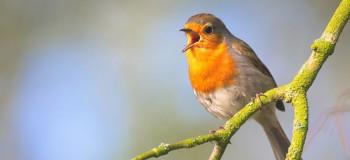 صدای پرندگان وحشی و جنگل صوتی