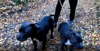 پنج نا از بزرگترین نژاد سگ دنیا