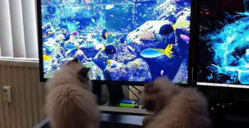 مستند سینمایی عشق به بچه گربه ها زیرنویس فارسی
