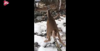 کلیپ نجات دادن آهو در دریاچه یخ زده
