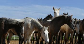 درمان سریع بیماری کچلی ( ringworm ) در اسب