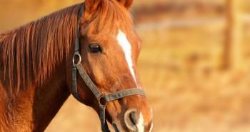 علائم ،پیشگیری و درمان بیماری انگلی در اسب