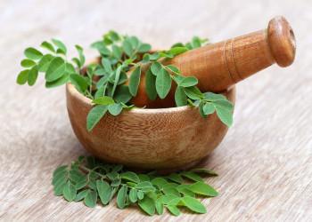 خواص دارویی و درمانی گیاه مورینگا