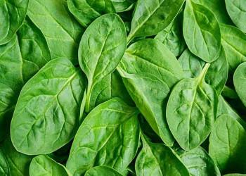 29خواص دارویی و درمانی اسفناج ،مضرات این سبزی،غذای اسفناجی