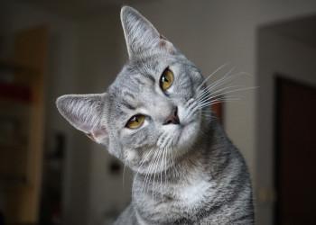 معیارهای انتخاب نام مستعار برای گربه + لیست نام جدید