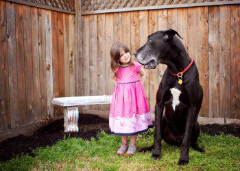 معیارهای انتخاب نام مستعار برای سگ + لیست نامهای جدید