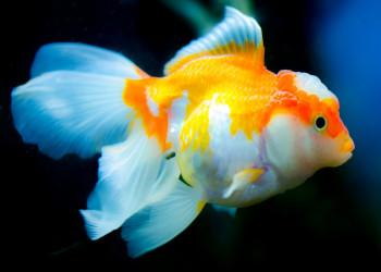 6 راه درمان و پیشگیری بیماری سفیدک در ماهی و آکواریم