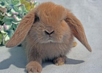 علل و درمان فوری ریزش موی ( ringworm  ) خرگوش