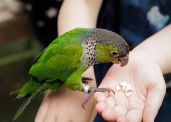 علل ، تشخیص و درمان عفونت چشم در طوطی