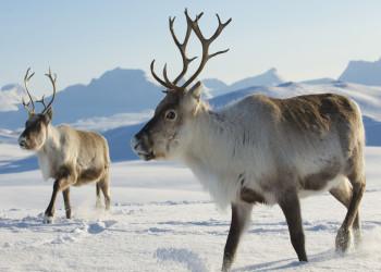 حیوانات چگونه زمستان را سپری میکنند ؟ مهاجرت ، خواب زمستانی و سازگاری حیوانات با محیط