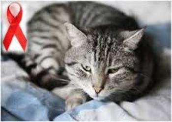 مبارزه با ایدز به کمک گربه ها!!