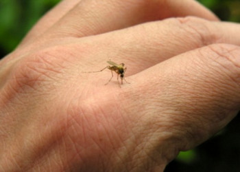 نیش زدن پشه،آیا نسبت به دیگران از پشه ها بیشتر نیش می خورید؟