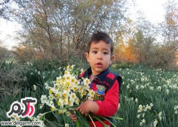 عکسهای زیبای نرگس زار کازرون استان فارس