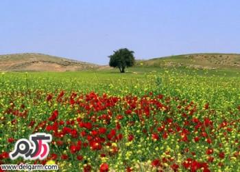 زیبایی های خوزستان در فصل بهار