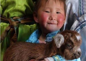 دختری که با گاو ها بزرگ شده .!!