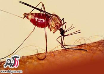 درمان مالاریا