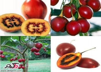 خواص و فایده میوه تاماریلو(گوجه فرنگی درختی)