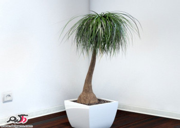 نگهداری و پرورش گیاه آپارتمانی لیندا