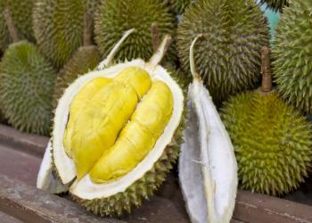 خواص و فواید دارویی و درمانی میوه خارگیل