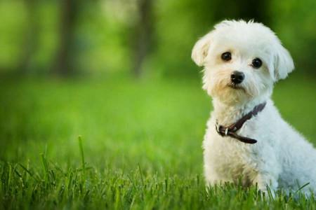 باور نجس بودن سگ از کجا آمده؟