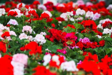 معرفی 27 گل و گیاه آفتاب دوست مناسب فصل تابستان و مکان های گرم