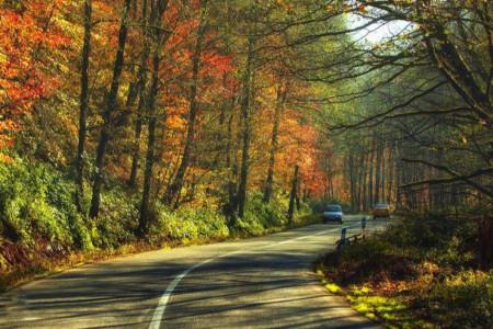 جاده جنگلی اسالم به خلخال و بهترین زمان برای سفر کردن به آن