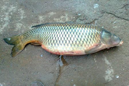 اگر ماهی زنده را در بیرون آب، کشته و پاک کنیم، خوردن آن چه حکمی دارد؟