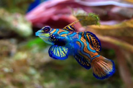 پرطرفدارترین ماهی های آکواریومی و شرایط نگهداری از آنها