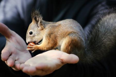 چگونگی نگهداری سنجاب در خانه