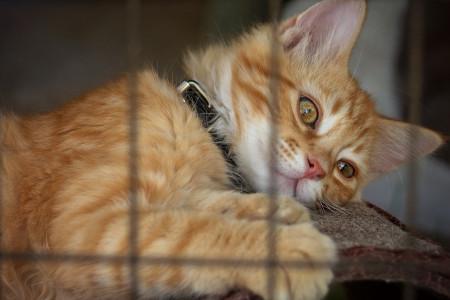 2 دلیل قانع کننده برای عقیم کردن حیوانات خانگی
