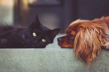 هلیکو باکتر بیماری مشترک انسان و سگ ، گربه ، تشخیص و درمان فوری