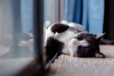 رهایی از بوی بد دستشویی گربه