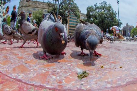 تشخیص بیماری پرنده از روی رنگ فضله