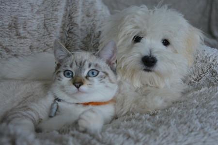 سگ یا گربه؟ نگهداری کدوم بهتره؟