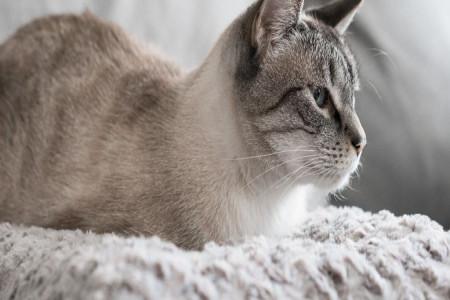 چرا باید کم خونی گربه را جدی گرفت؟ از علل تا درمان این عارضه