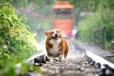 علائم و تشخیص هیپوتیروئیدیسم در سگ و درمان سریع آن