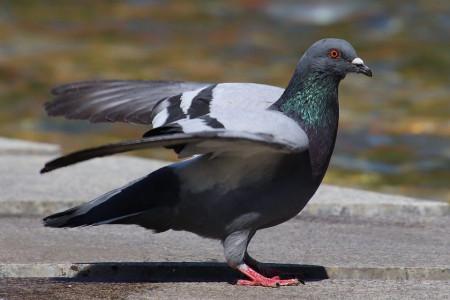 تشخیص شپشک در پرنده و راههای از بین بردن آن در پرنده و قفس