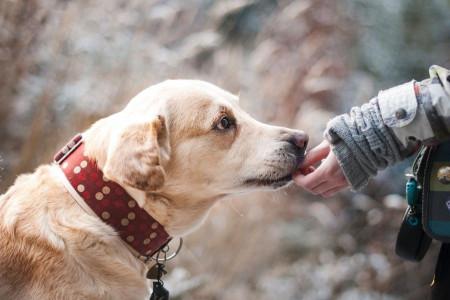 معرفی سگهای باهوش و آشنایی با ویژگی های منحصر به فرد هر کدام