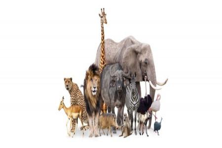 خطرناک ترین حیوانات جهان: معرفی 15 تا از خطرناک ترین حیوانات دنیا
